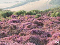 Heathland and Acid Grassland
